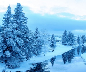 forest, water, and winter image