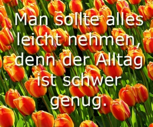 alltag, flowers, and tulpen image