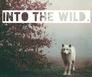 wild, wolf, and my edit image