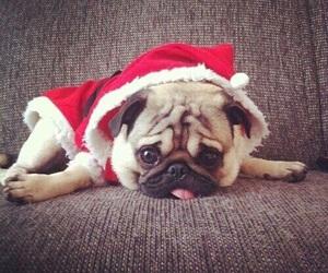 christmas, cute, and dog image