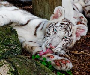 animals, baby, and nature image