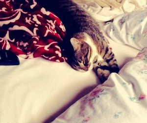 bedroom, cats, and fashion image