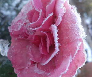 cold, garden, and winter image