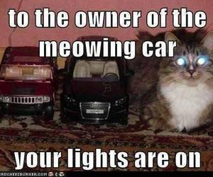 car, cat, and funny image