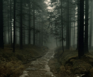dreams, fog, and forest image