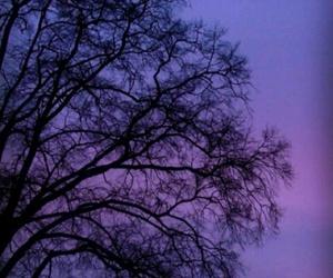 purple, black, and sky image
