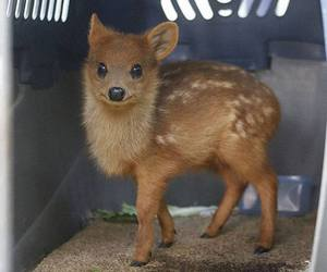 baby animals, deer, and cute animals image