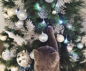 cat, festive, and christmas image
