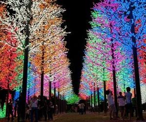 tree, light, and christmas image