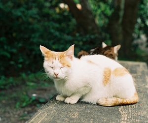 cat, cats, and contax aria image