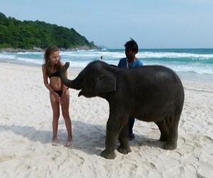 elephant, beach, and summer image