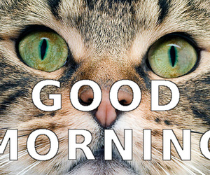 good morning, funny cats, and cat memes image