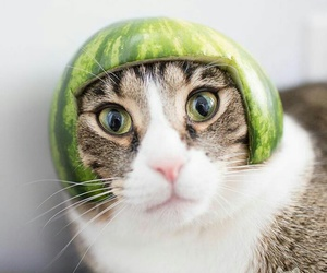 big eyes, funny, and hat image