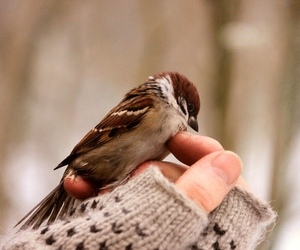 bird, hand, and winter image