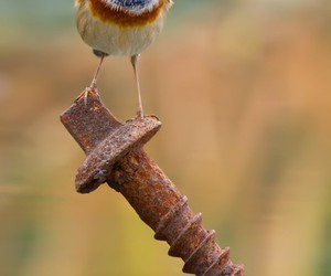bird, photography, and cute image