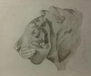 disegno, fantasy, and tigre image