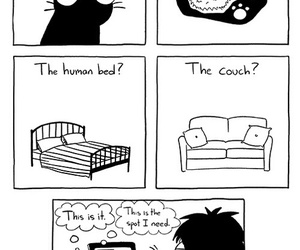 cat, sarah andersen, and Andersen image
