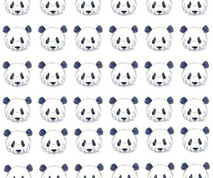 panda, background, and wallpaper image