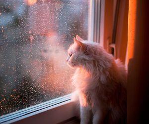 cat, rain, and animal image