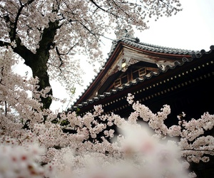flowers, tree, and japan image
