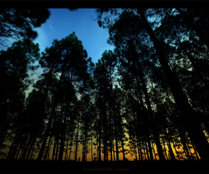 forest, light, and morning image