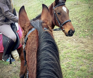 animal, beautiful, and chevaux image