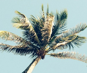 palm, palmtree, and thailand image