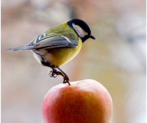apple, bird, and lonely image