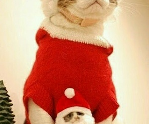 cat, christmas, and santa image