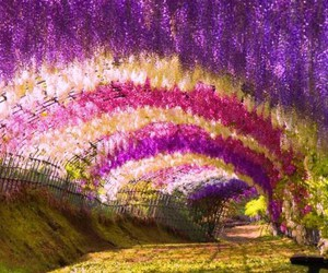 amazing, pink, and purple image