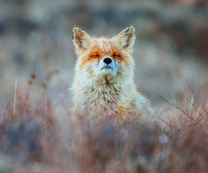 animal, picture, and cool image
