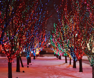 christmas lights and christmas trees image