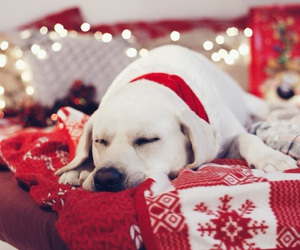 bed, white, and christmas image