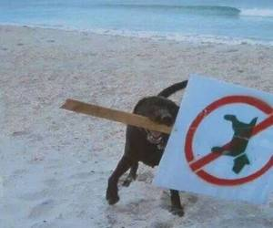 dog, beach, and funny image