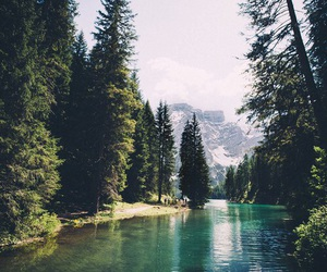 explore, paradise, and trees image