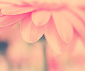 flower, pflanze, and natur image