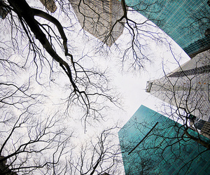 city, sky, and trees image