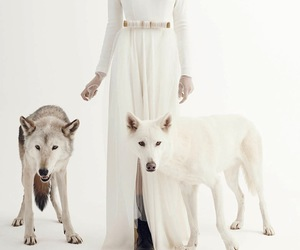 dress and wolf image