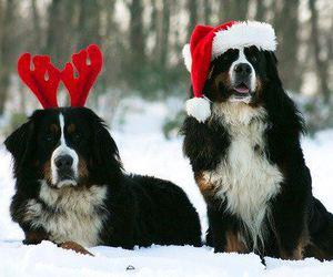 dog, christmas, and snow image