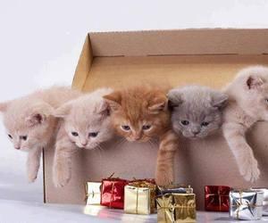 cat, kitten, and cute animals image