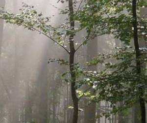 Lithuania and wood image