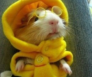 yellow, bee, and hamster image