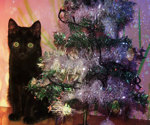 christmas, cat, and light image