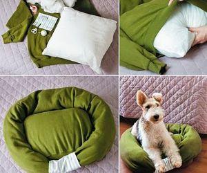 dog and diy image