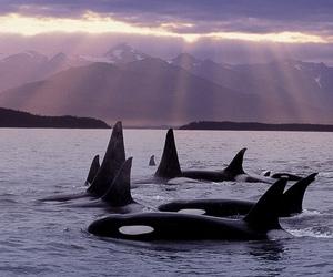 animal, whale, and beautiful image