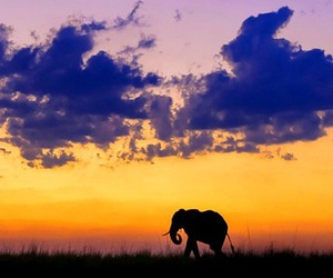 elephant, love, and sunset image
