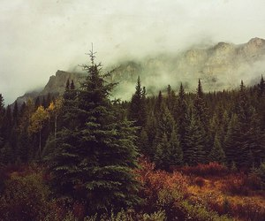 autumn, dreamy, and fall image