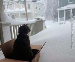 cats and snow image
