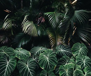 green, tropical, and theme image