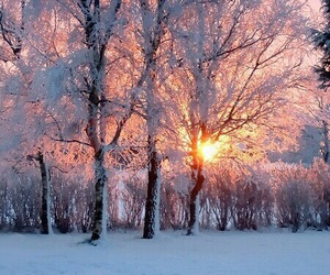 beautiful, snow, and tree image